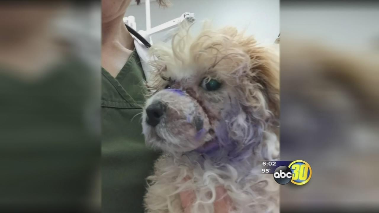 Some demanding animal abuse charges against Madera woman