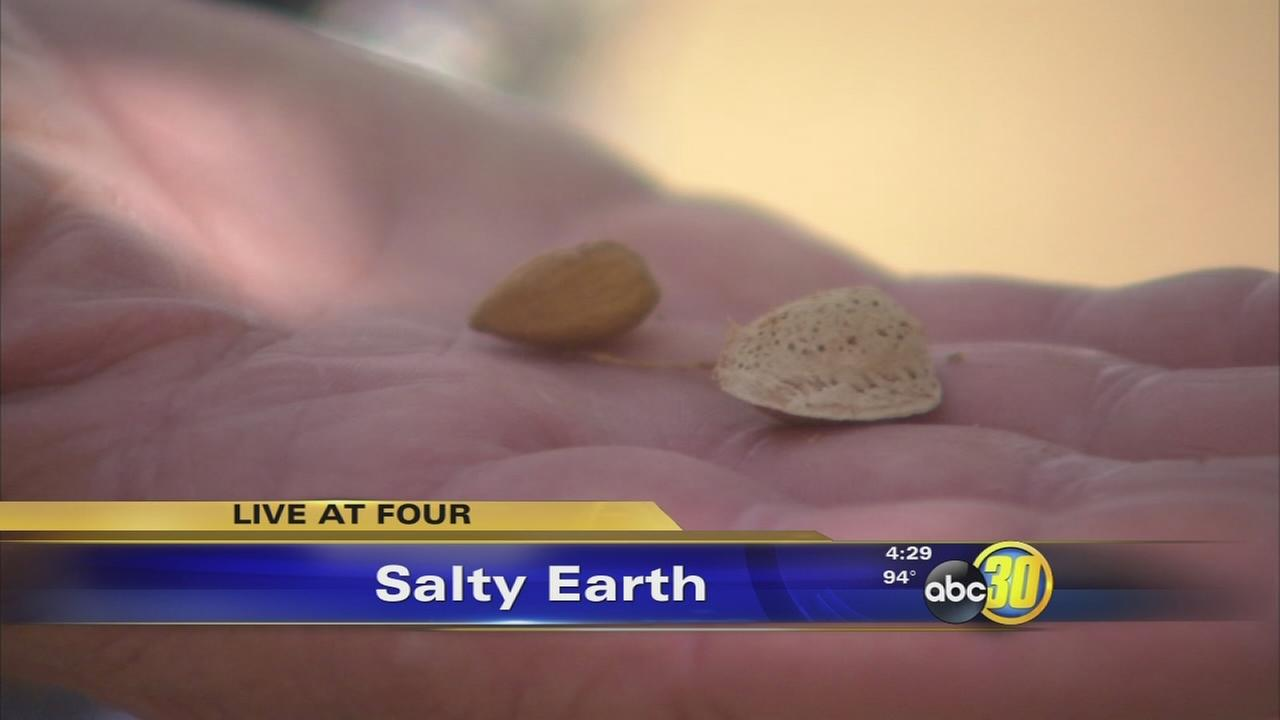 High salinity in groundwater impacting Valley almond crop
