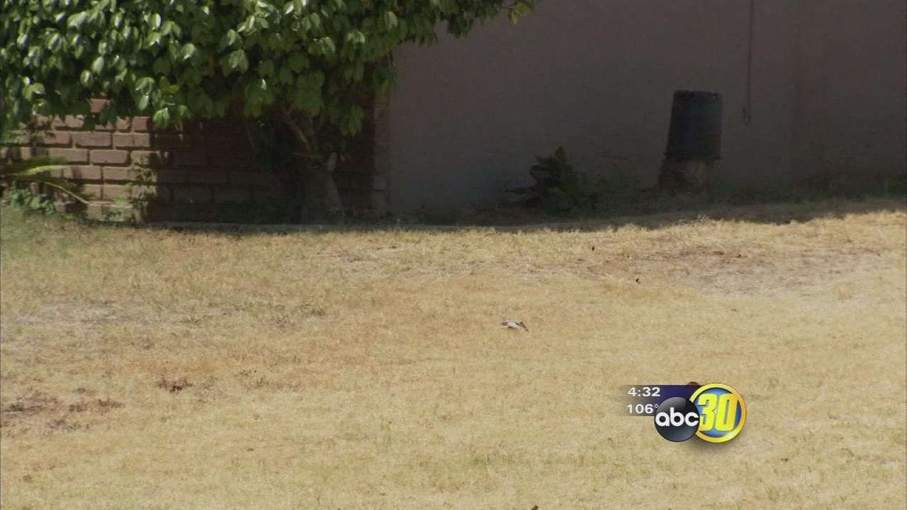 City of Clovis meeting water-saving goal
