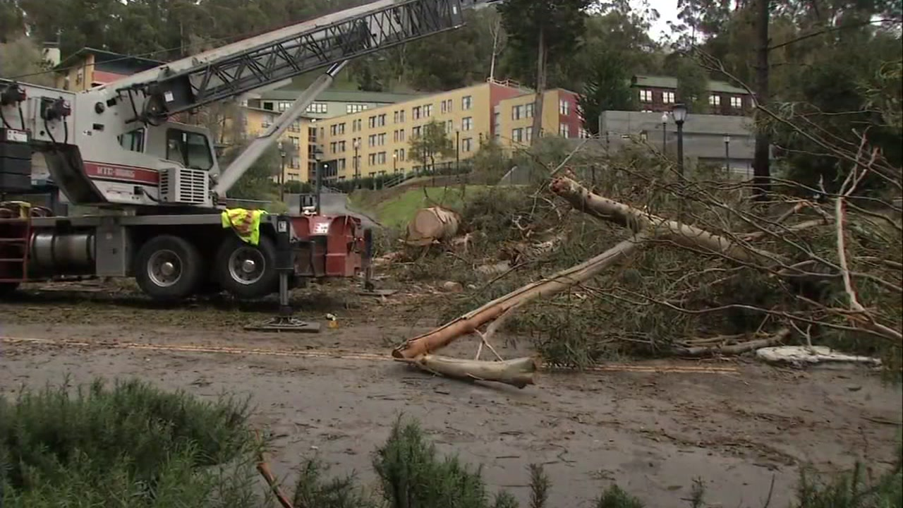 Debris is seen after a tree fell in Berkeley, Calif., crushing a car and killing the man inside.