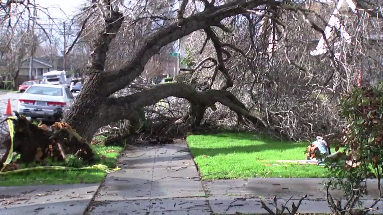 Downed tree in San Jose, California on Wednesday, January 9, 2019.