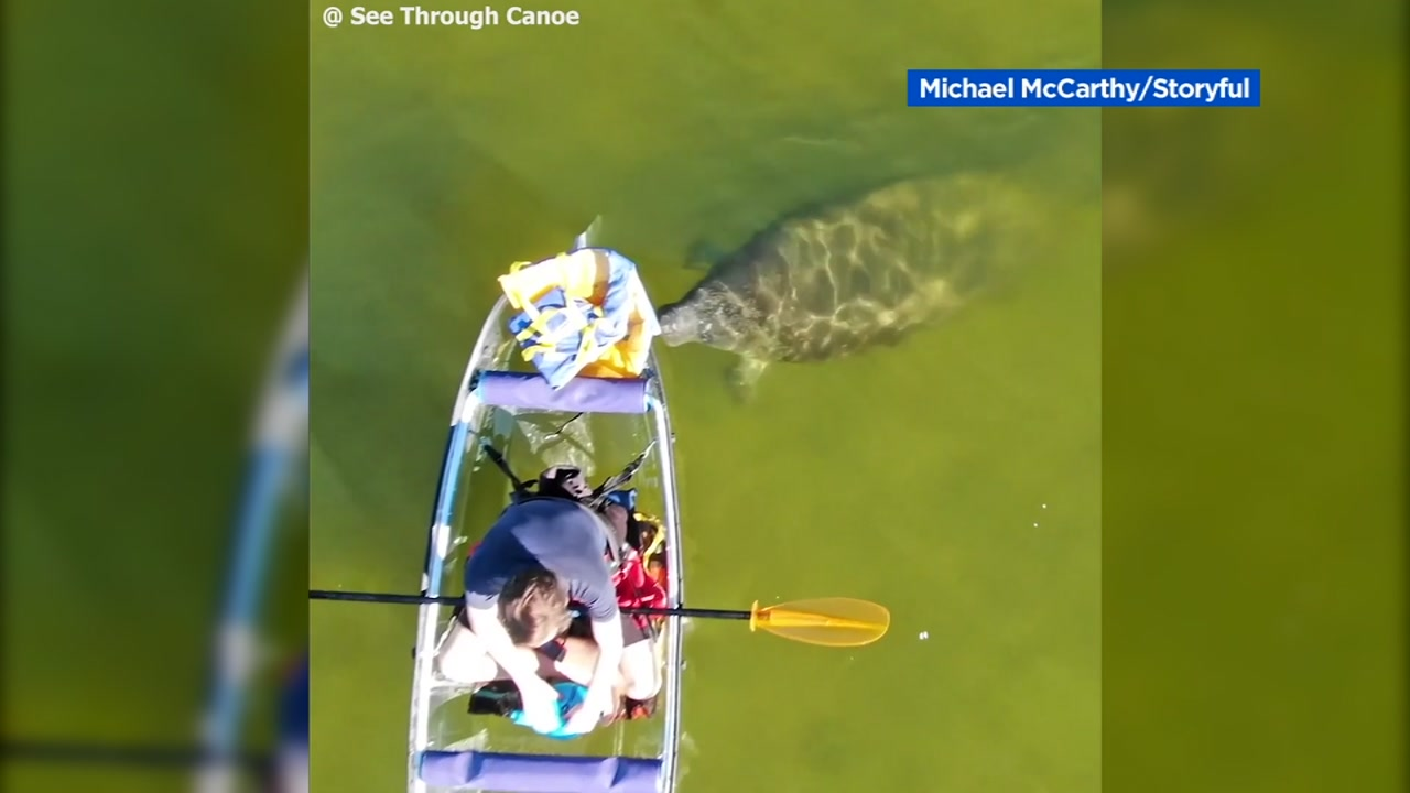 A manatee pushed a man in a canoe in Florida.