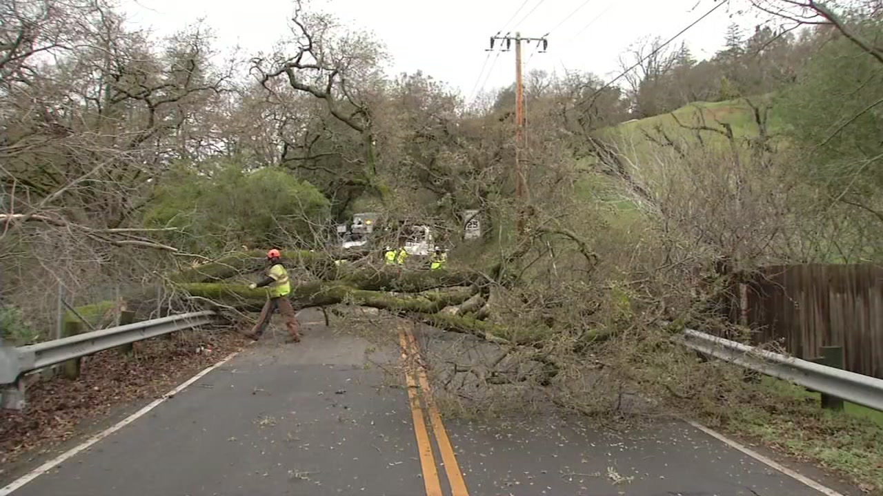 A large oak tree is seen across a road after falling in Lafayette, Calif. on Wednesday, Jan. 16, 2019.