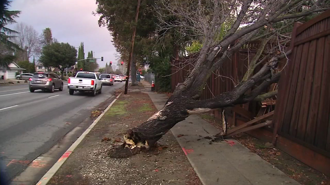 Fallen tree in San Jose, California on Thursday, January 17, 2019.