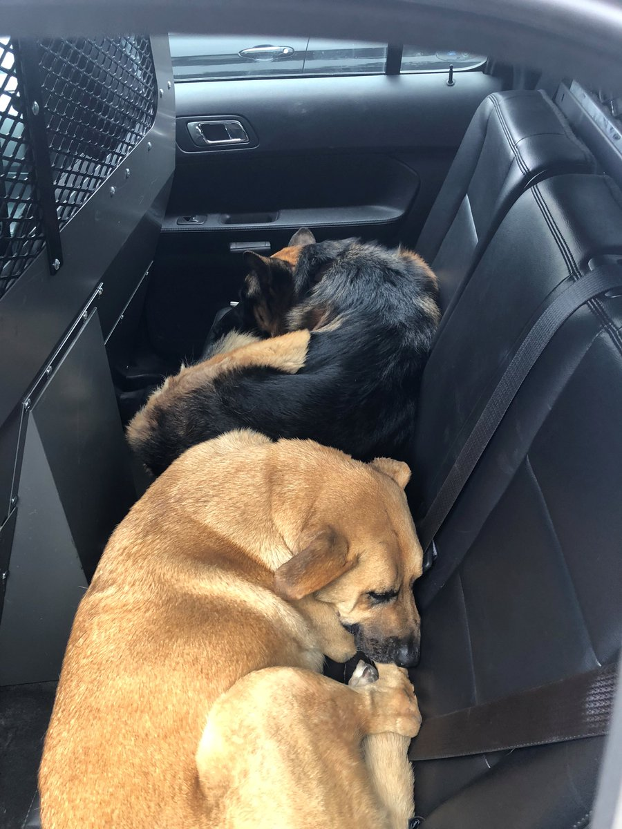 Two German Shepherds were rescued from westbound I-580 in Oakland on Sunday, September 16, 2018.