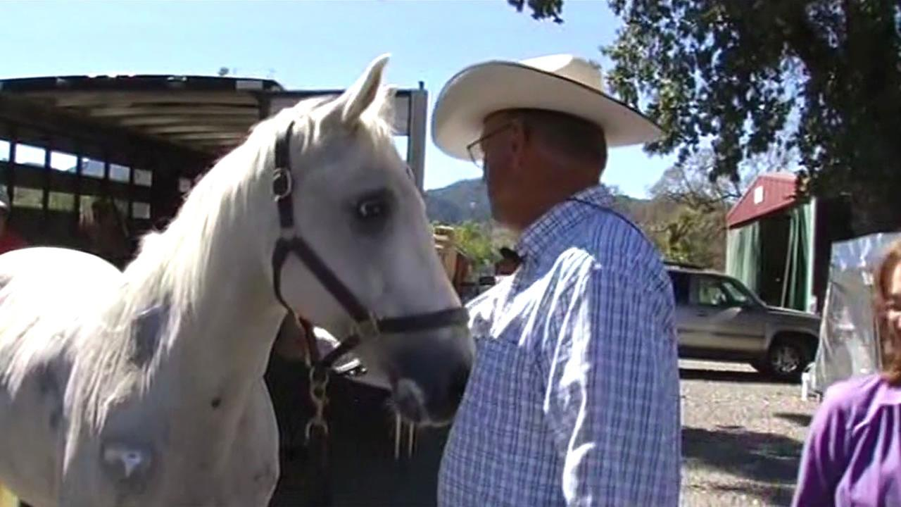 Valley Fire evacuee Randy Sternberg reunited with his horse Lightning in Middletown, Calif. on Friday, September 25, 2015.