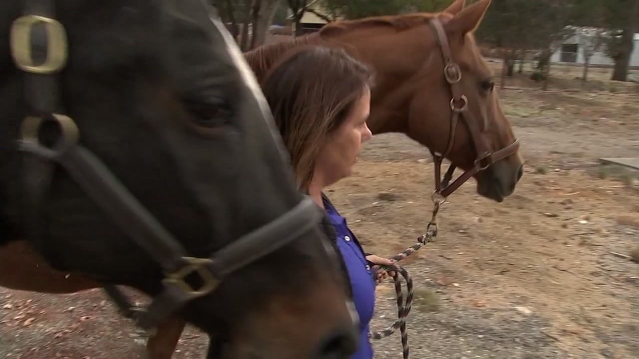 Therapy horses that helped Jaycee Dugard return one year after Nuns Fire