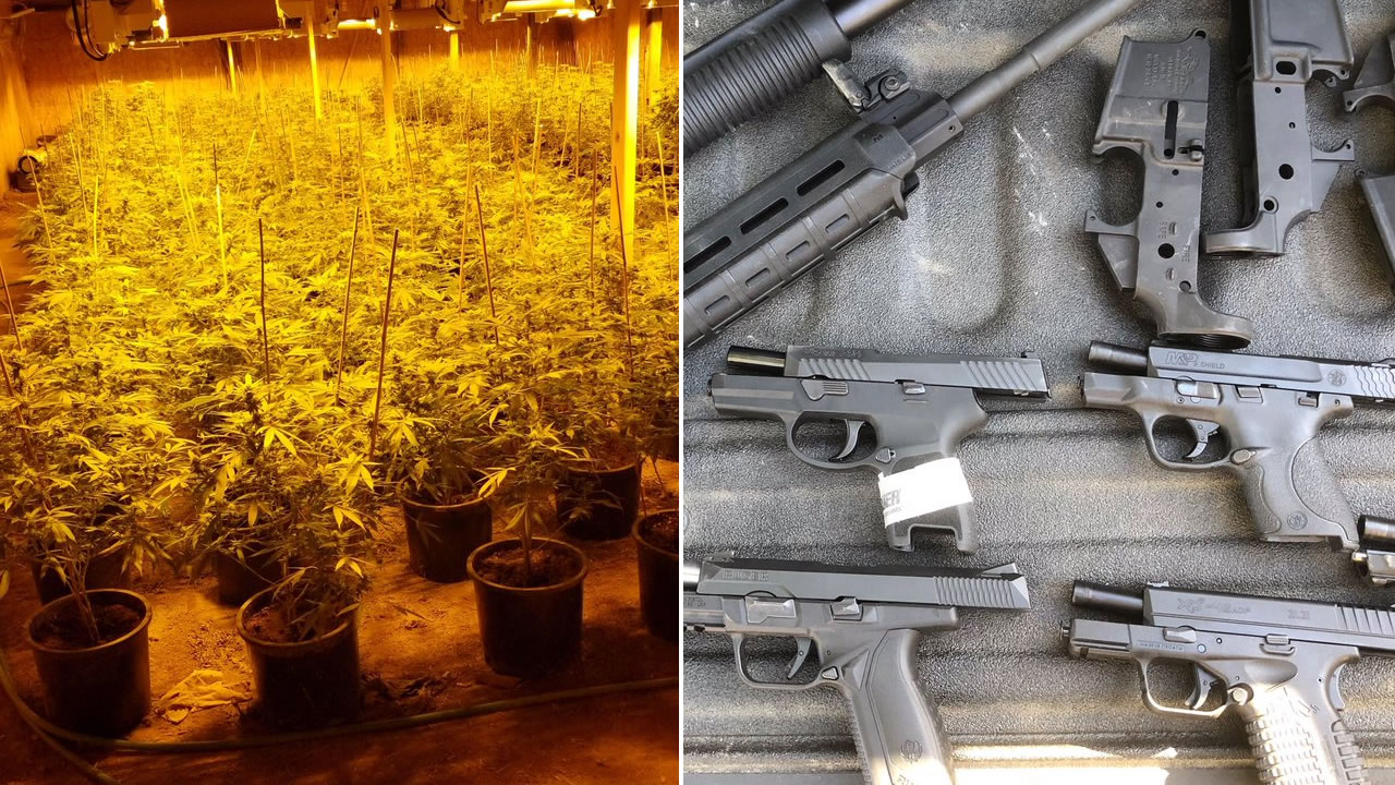 Nearly two dozen guns and thousands of marijuana plants were recovered in a bust in Santa Clara County, Calif. on Wednesday, Oct. 10, 2018.