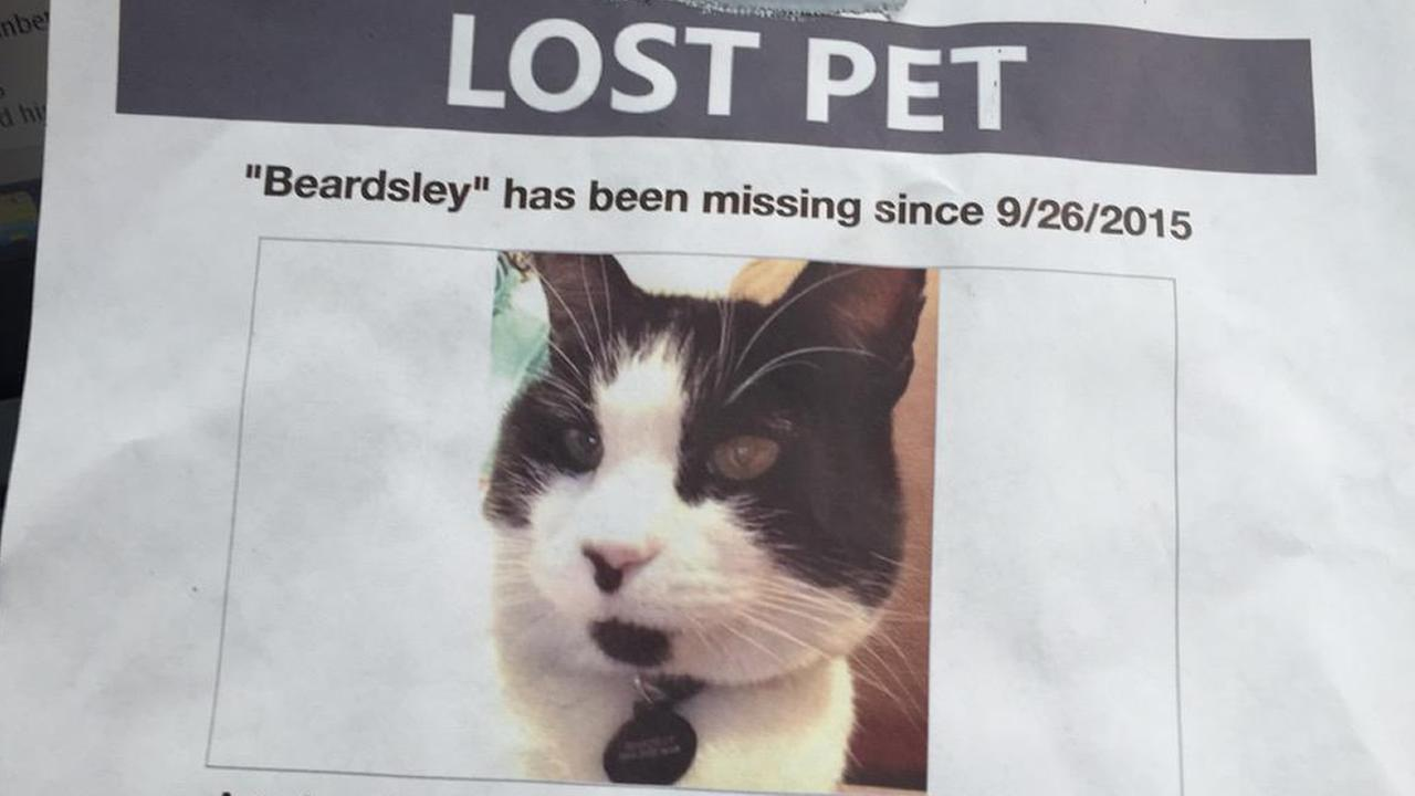 A woman says her cat went missing and then turned up dead on in San Jose, Calif. on Monday, September 28, 2015.