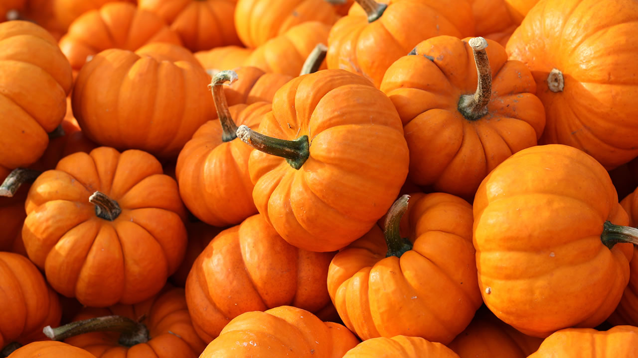 Pumpkins are shown in this undated file photo.