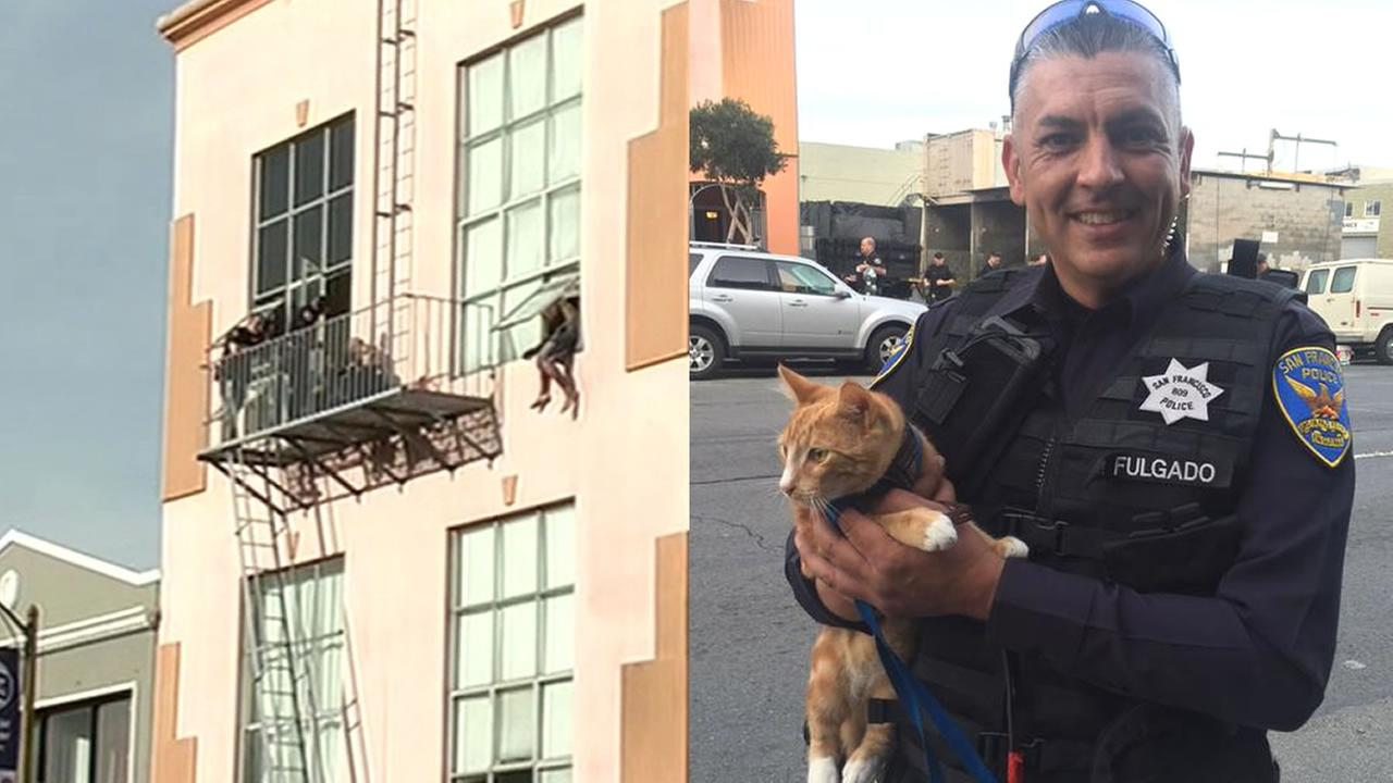 suspect standoff, cat and officer