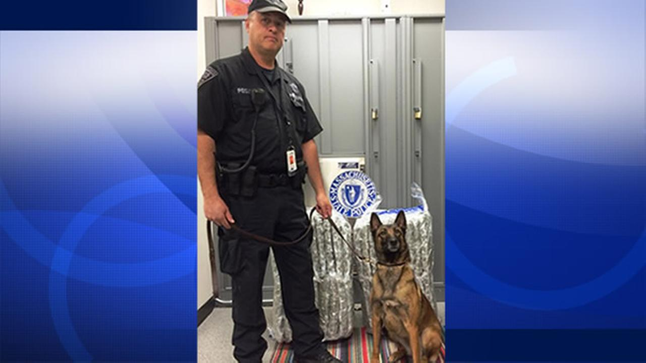 A Massachusetts state police officer stands next to at least 100 pounds of marijuana that a man allegedly tried to smuggle from SFO to Boston.