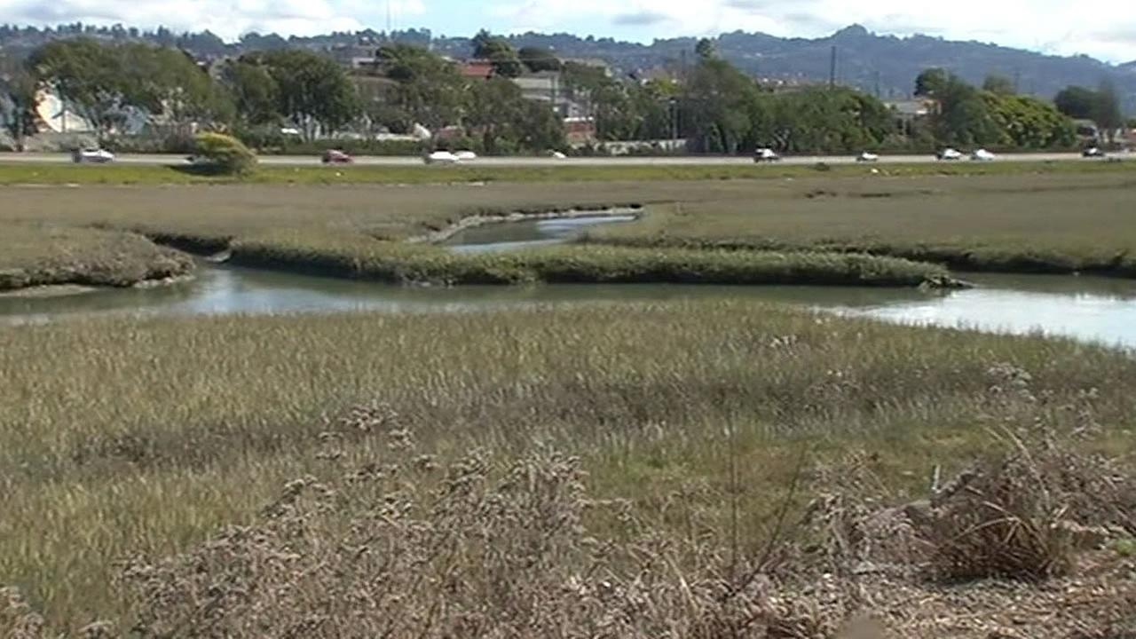 Bay Area wetlands