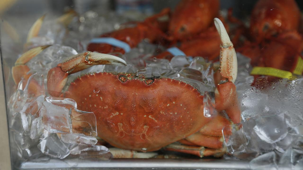 An imported Dungeness crab sits on ice for sale at Fishermans Wharf Thursday, Nov. 5, 2015, in San Francisco.
