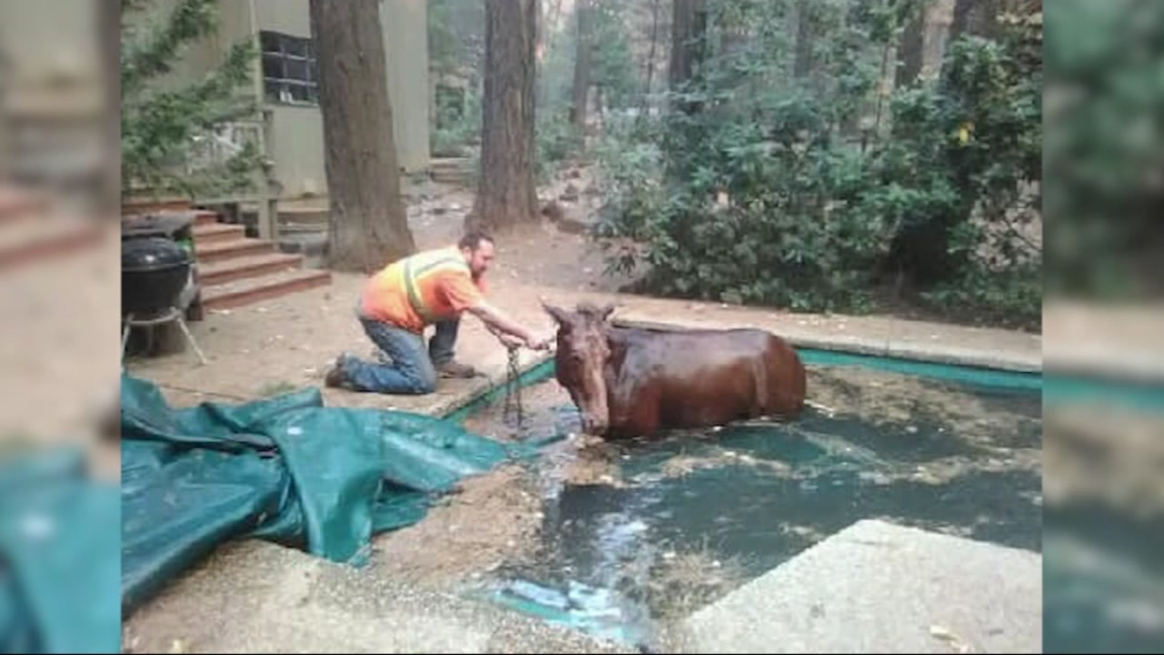 Jeff Hill shared this photo of a horse found in an evacuated part of Paradise, Calif.