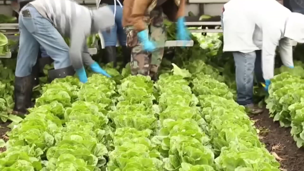 Bay Area ag officials say there could be an impact to sales after the most recent outbreak of E. Coli prompted the CDC to tell people to not eat any romaine.