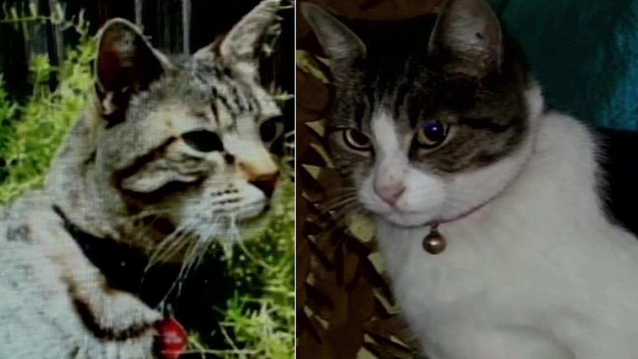 Traveller and Thumper were identified as two of the victims of accused cat killer Robert Farmer after their collars were found in his car.