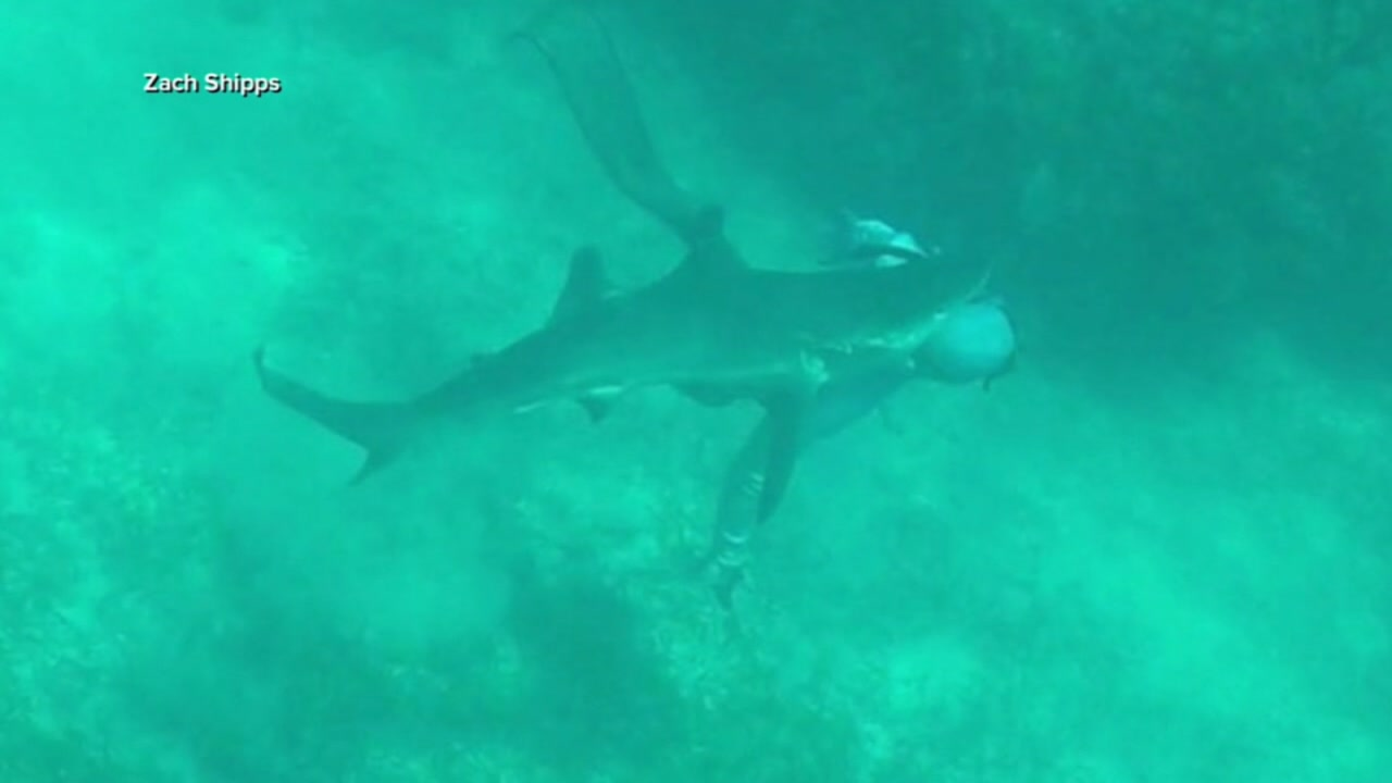 Video shows Will Krause being attacked by a shark in the Bahamas.