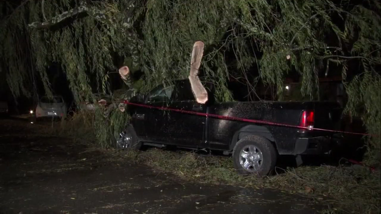 A tree fell onto a truck in Mill Valley, California on Thursday, November 29, 2018.
