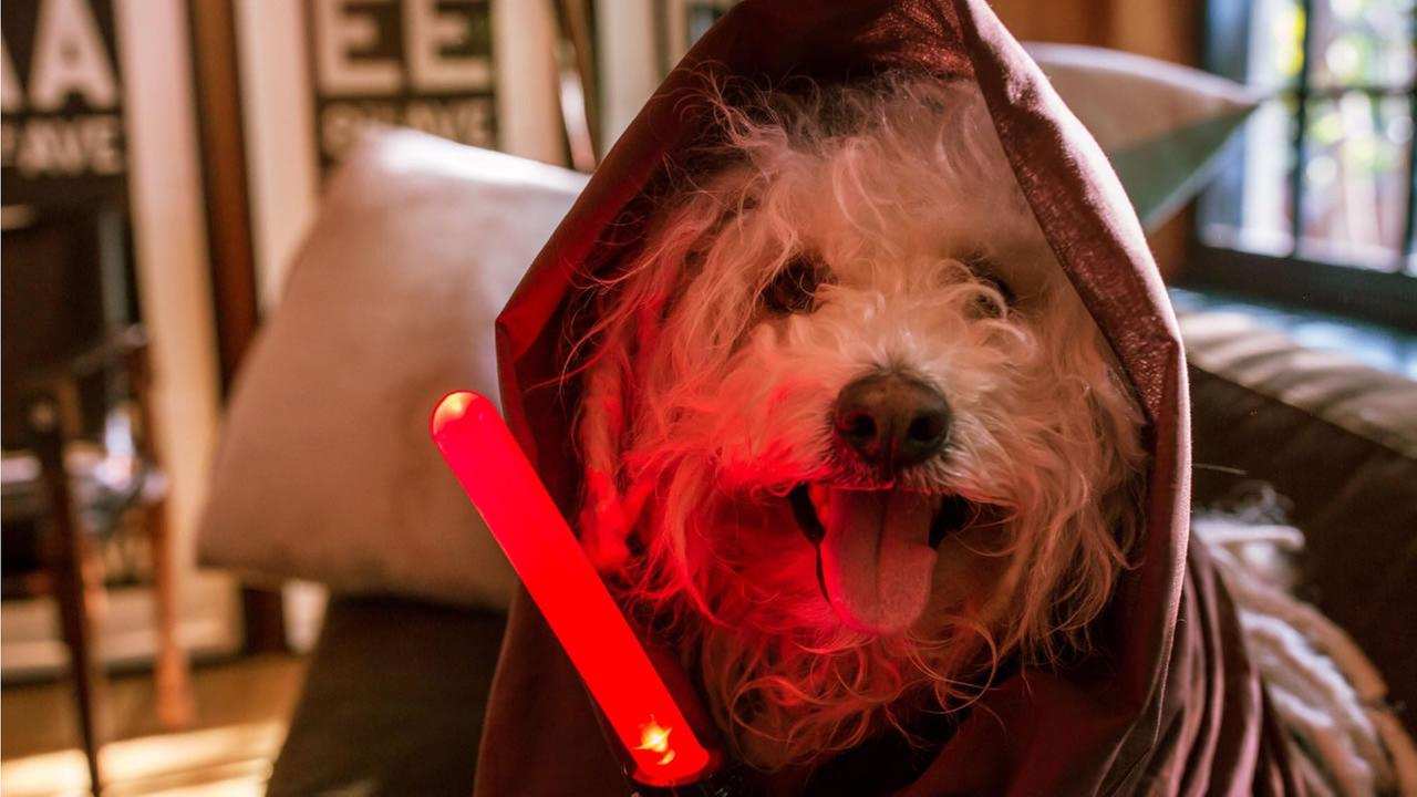 Facebook CEO Mark Zuckerberg posted this pic of his sheepdog, Beast, dressed in Star Wars attire on Friday, December 18, 2015.
