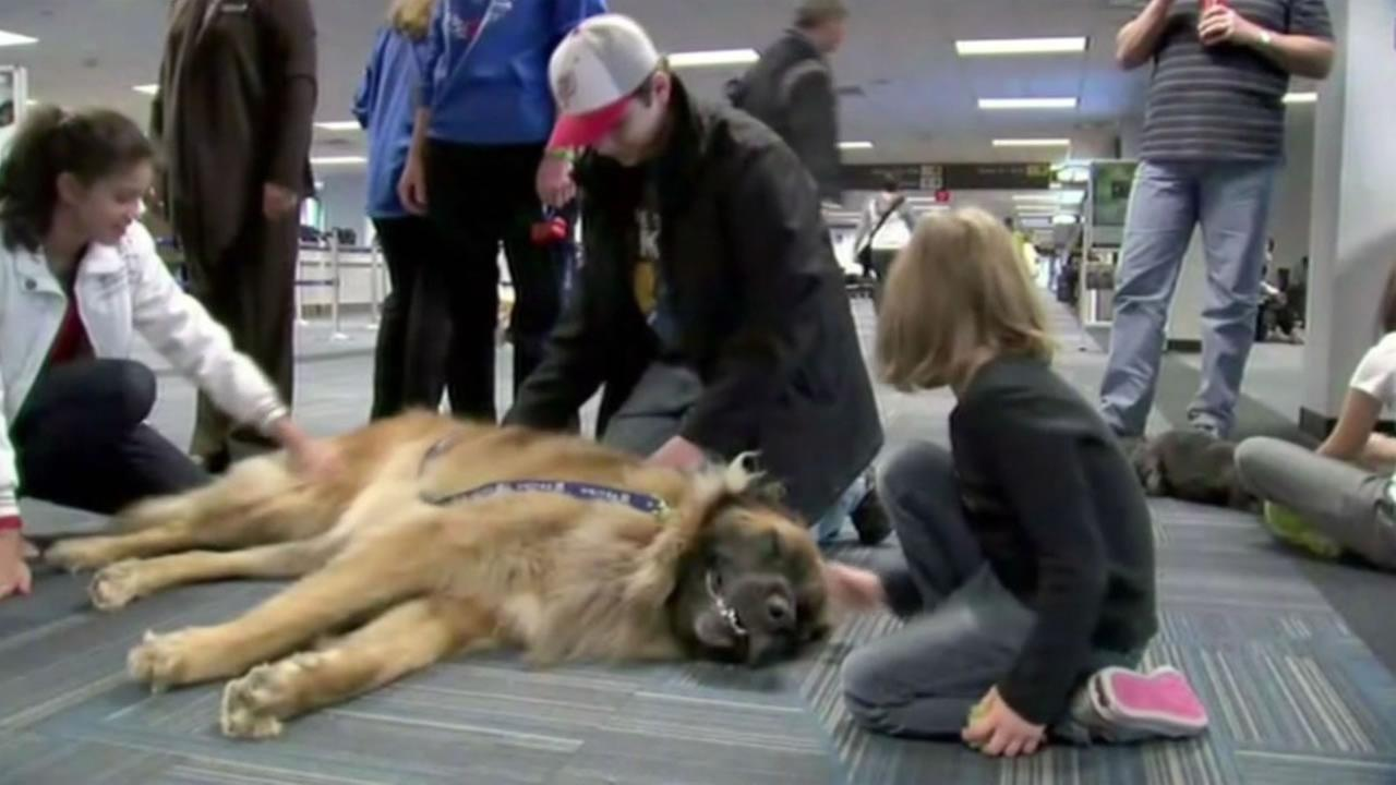 Alaska Airlines Pet Travel