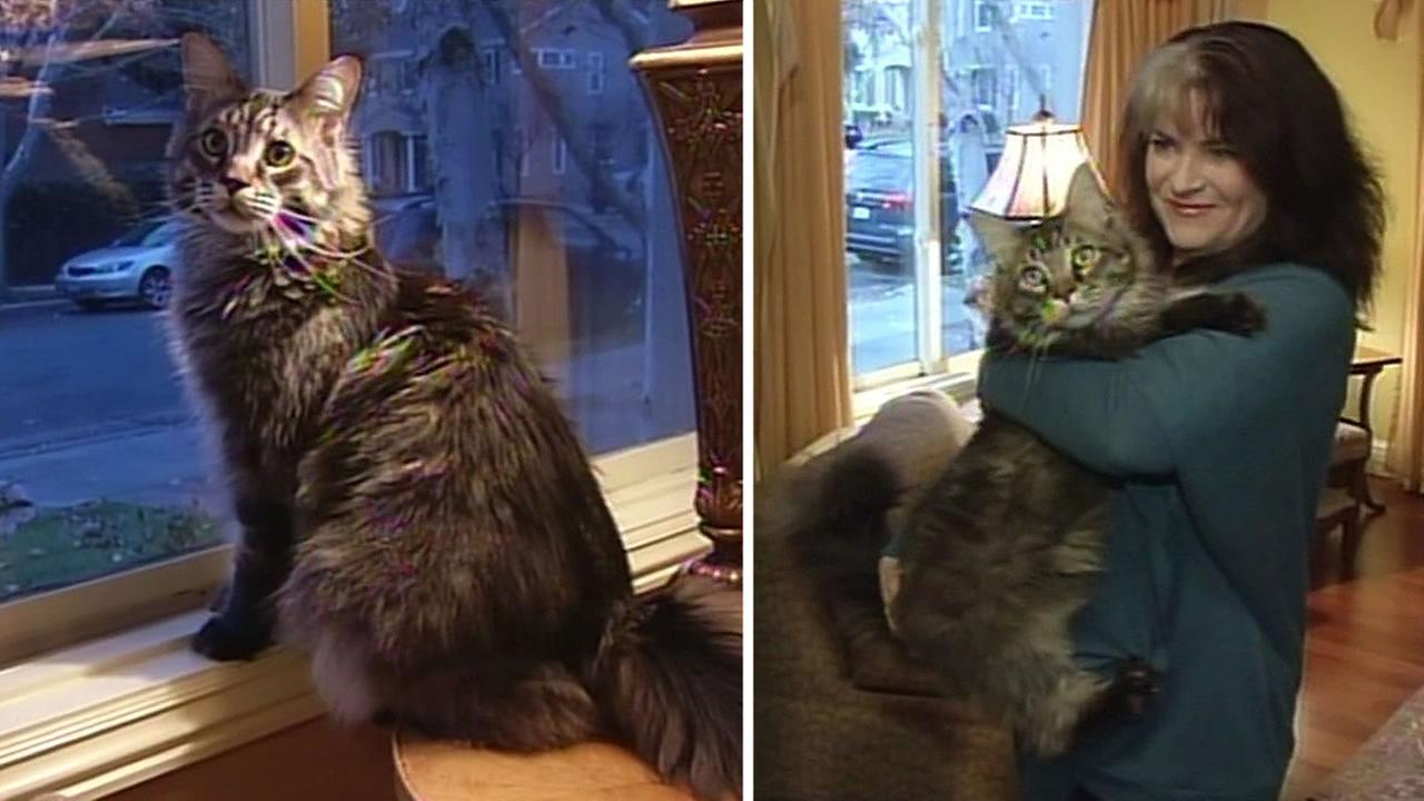 Picture Of The Biggest House Cat In The World