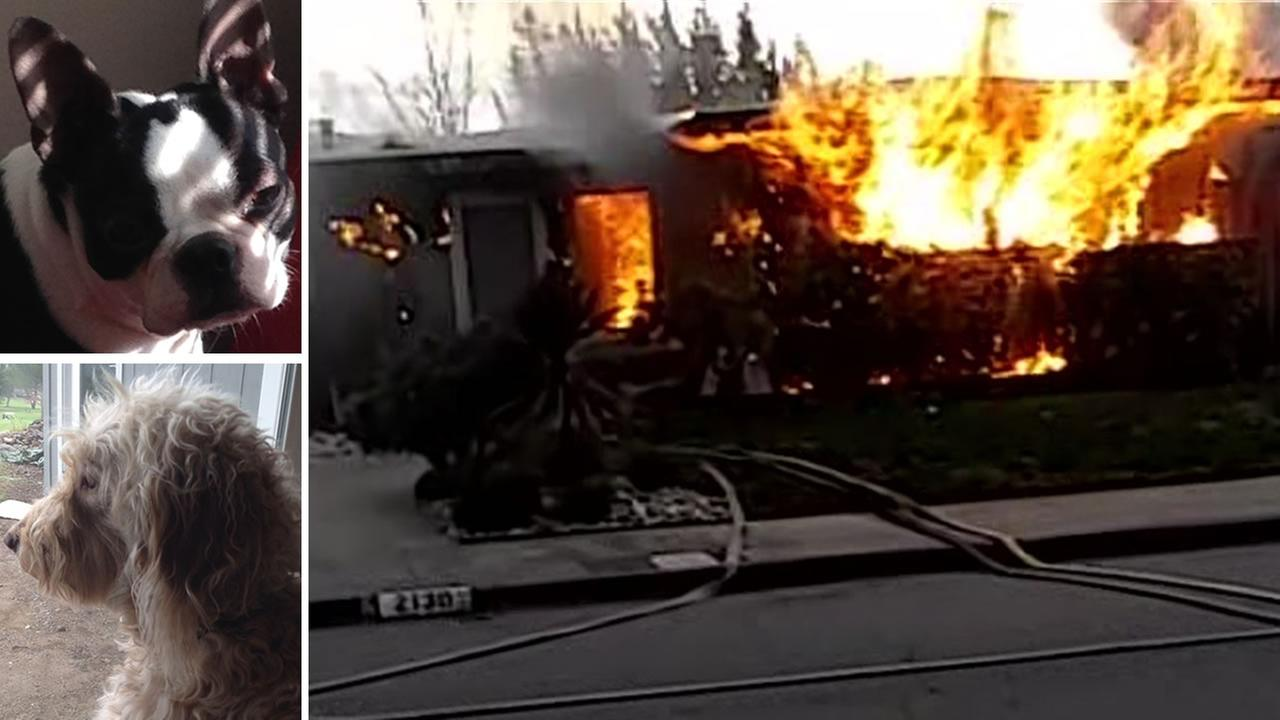 Fire officials say a hoverboard sparked a house fire in Santa Rosa, Calif. on Tuesday, January 19, 2016 that killed a Boston terrier named Boo and a labradoodle named Bella.