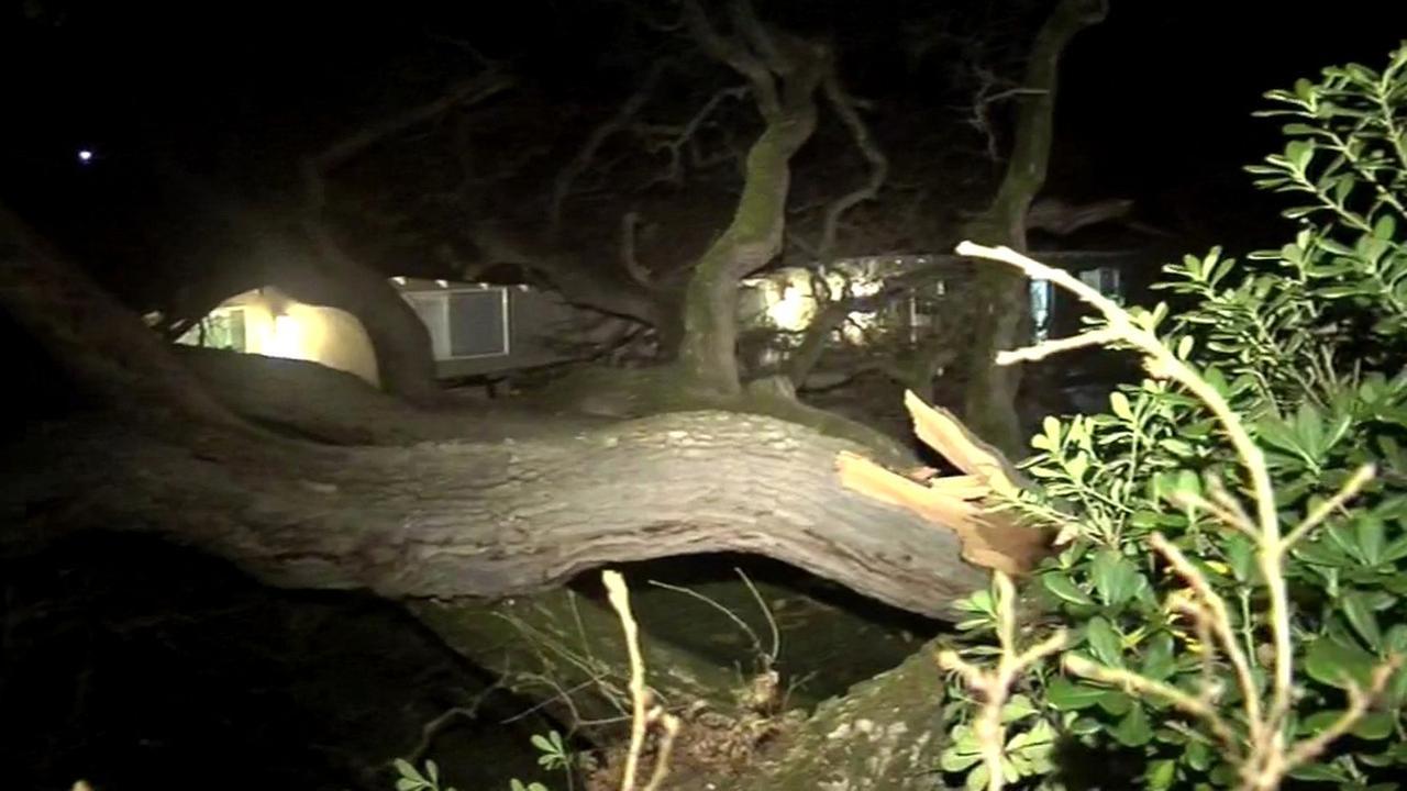 Tree crashes onto home in Walnut Creek, Friday, January 29, 2016.