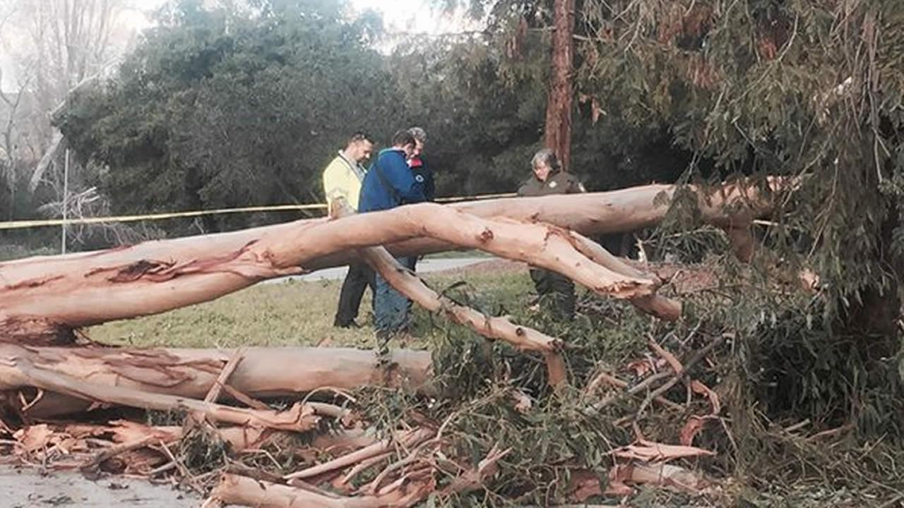 On Tuesday, February 2, 2016, city officials and an arborist examined a tree that fell and killed a man in San Jose, Calif. the previous day.