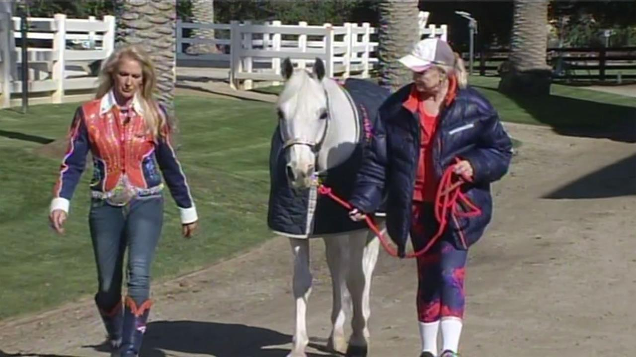 The Denver Broncos mascot Thunder at the Stanford University Equestrian Center in Palo Alto, Calif. Feb. 4, 2016.