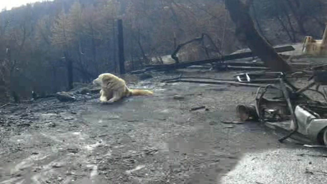 Madison the dog is seen patiently waiting for his family to return after the Camp Fire in this undated image.