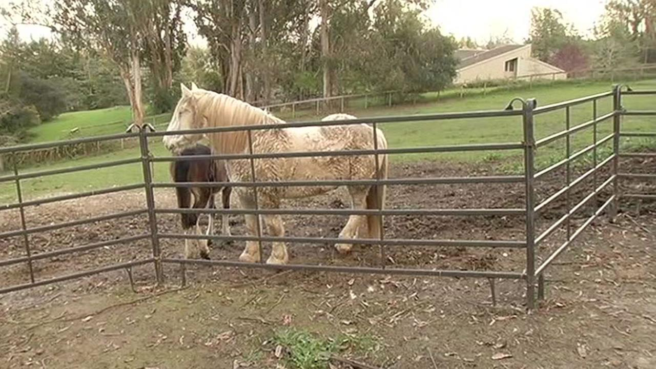 This image shows the property near Sebastopol, Calif. Feb. 23, 2016 where a horse and a dog were poisoned after eating cookies.