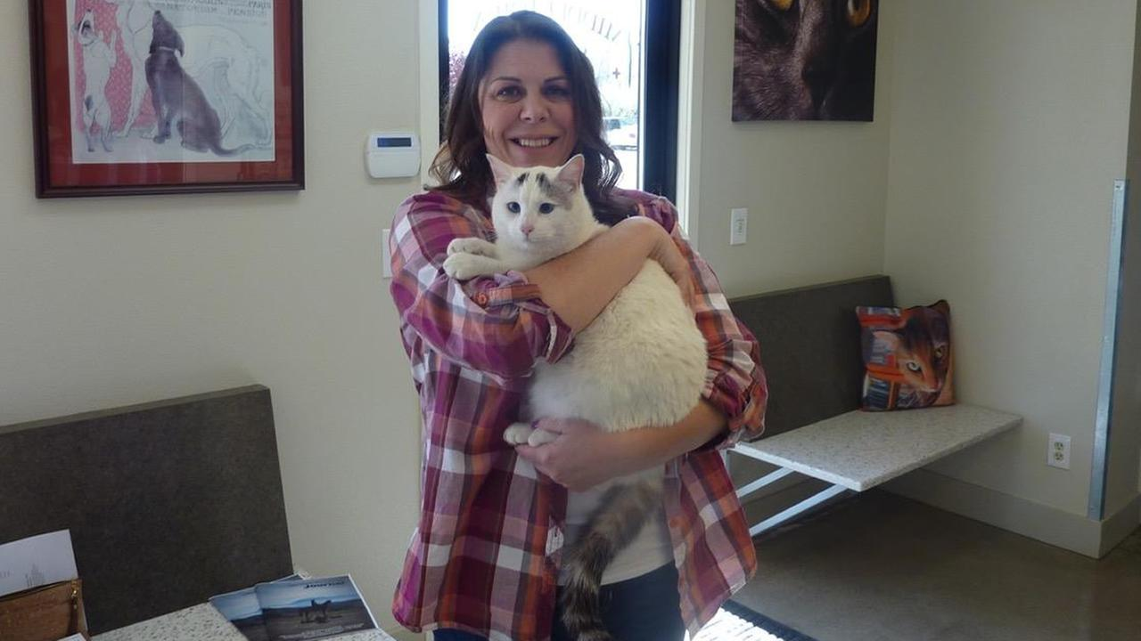 The Middletown Animal Hospital says a woman found her cat thats been missing since last Septembers devastating Valley Fire on March 23, 2016.