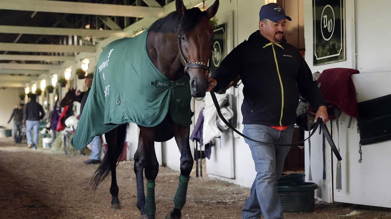 A hot walker takes Kentucky Derby entrant Nyquist for a walk after a workout at Churchill Downs Friday, May 6, 2016, in Louisville, Ky.