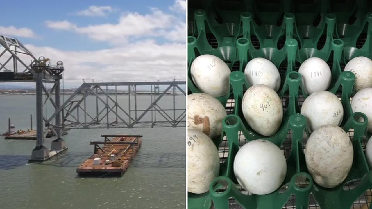 Bay Bridge truss lowered and eggs found during demolition, Tuesday, May 24, 2016.