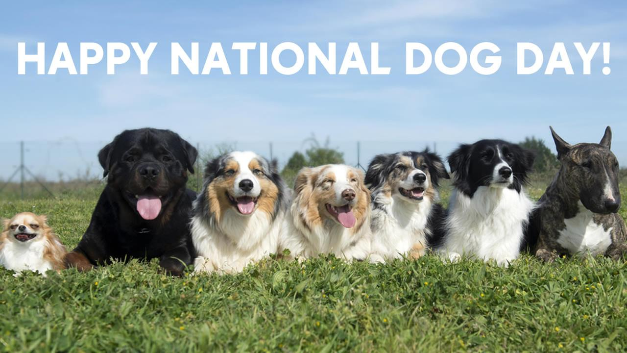 7 awesome dog videos in honor of National Dog Day Friday