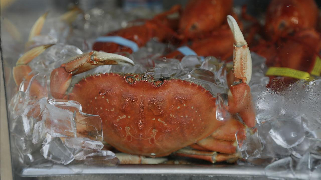 An imported Dungeness crab sits on ice for sale at Fishermans Wharf Thursday, Nov. 5, 2015, in San Francisco. (AP Photo/Eric Risberg)