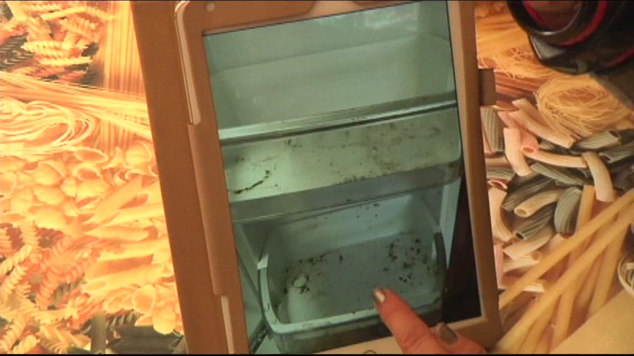 This image shows an image of the moldy refrigerator Sears wouldnt replace.