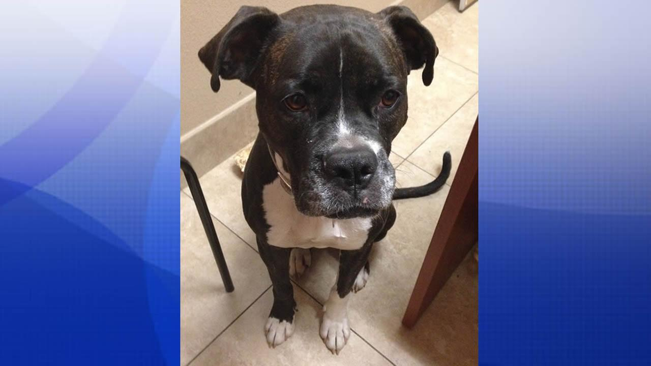 Ny Woman Attacked By Rescued Dog