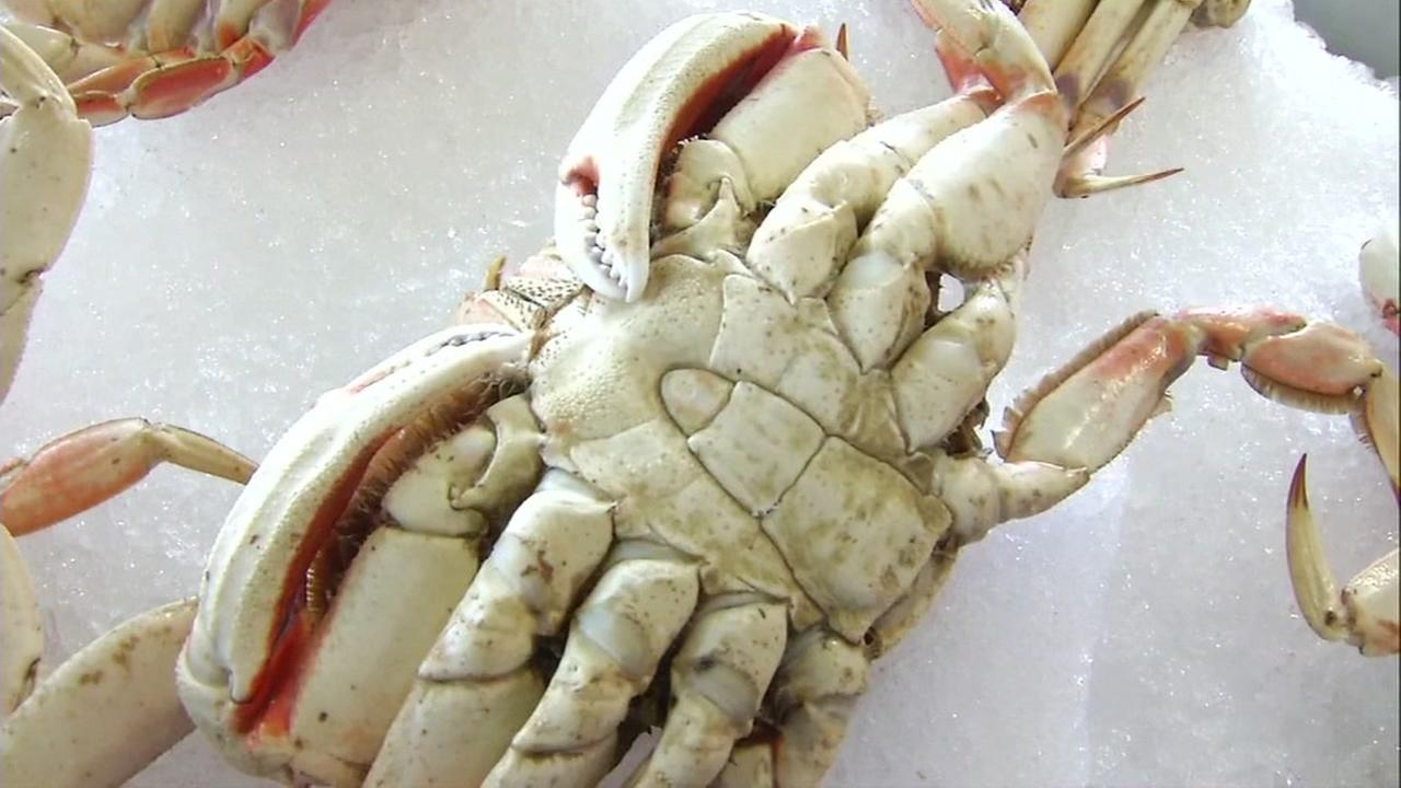 This is an undated image of a crab.