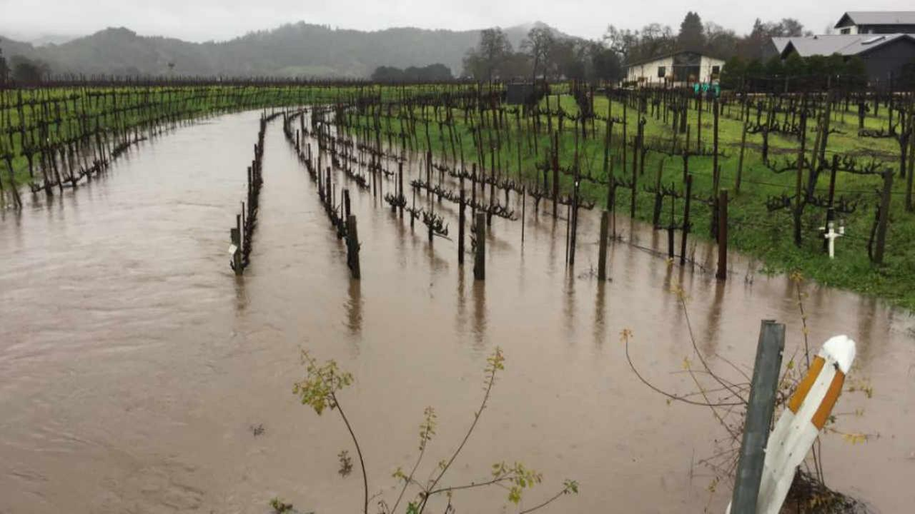 A flooded vineyard is seen in Yountville on Sunday Jan. 8, 2017.