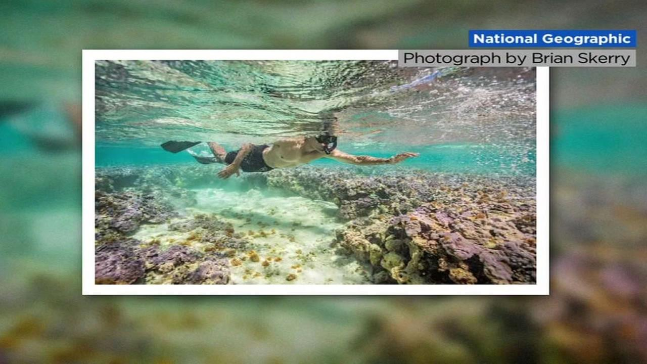 This is an undated image of President Barack Obama snorkeling off the coast of Hawaii in the Midway Islands.