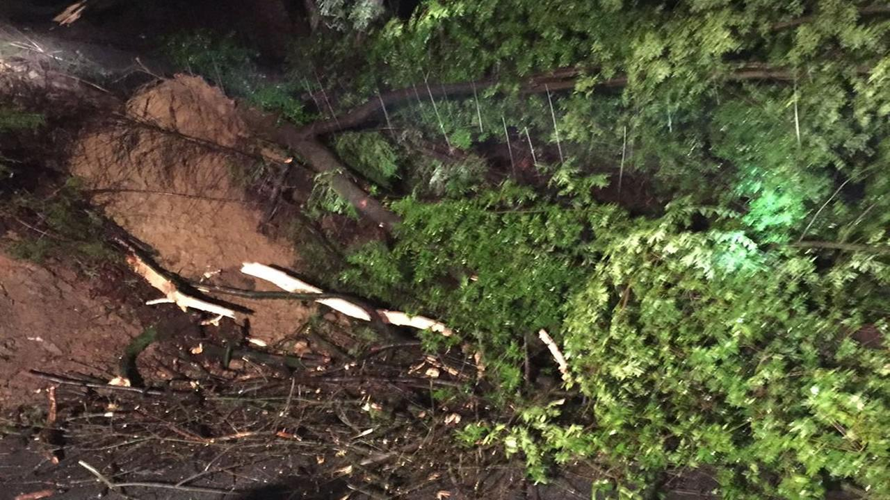 A tree fell on Highway 17 in Los Gatos, Calif. on Jan 20, 2017, closing the highway.