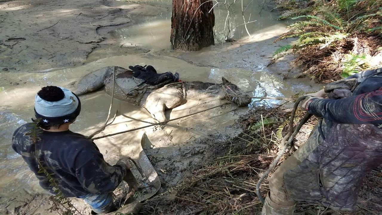 A horse appears stuck in mud in the Santa Cruz Mountains in Santa Cruz County, Calif. on March, 7, 2017.