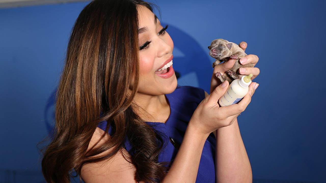 ABC7s Natasha Zouves is seen holding a puppy at our adoption event with our Perfect Pet partners in honor of National Puppy Day in San Francisco on Thursday, March 23, 2017.