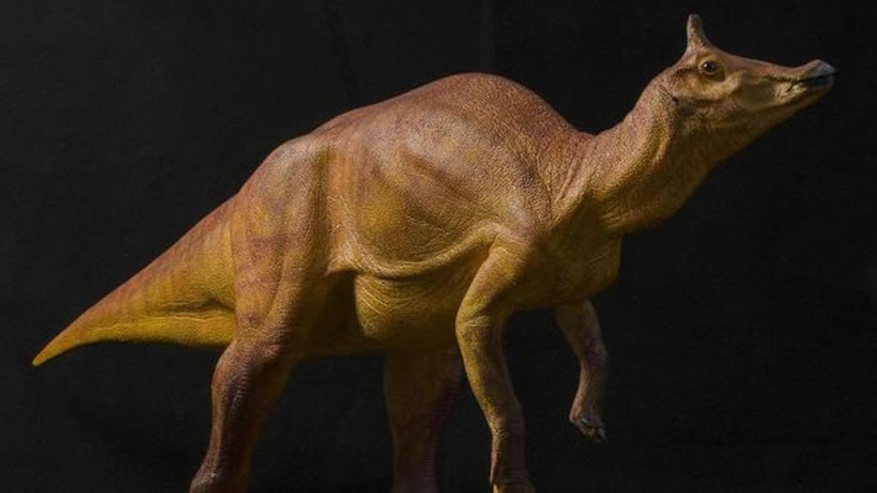 A rendering of the Augustynolophus morrisi can be seen on a newly-created Twitter account.