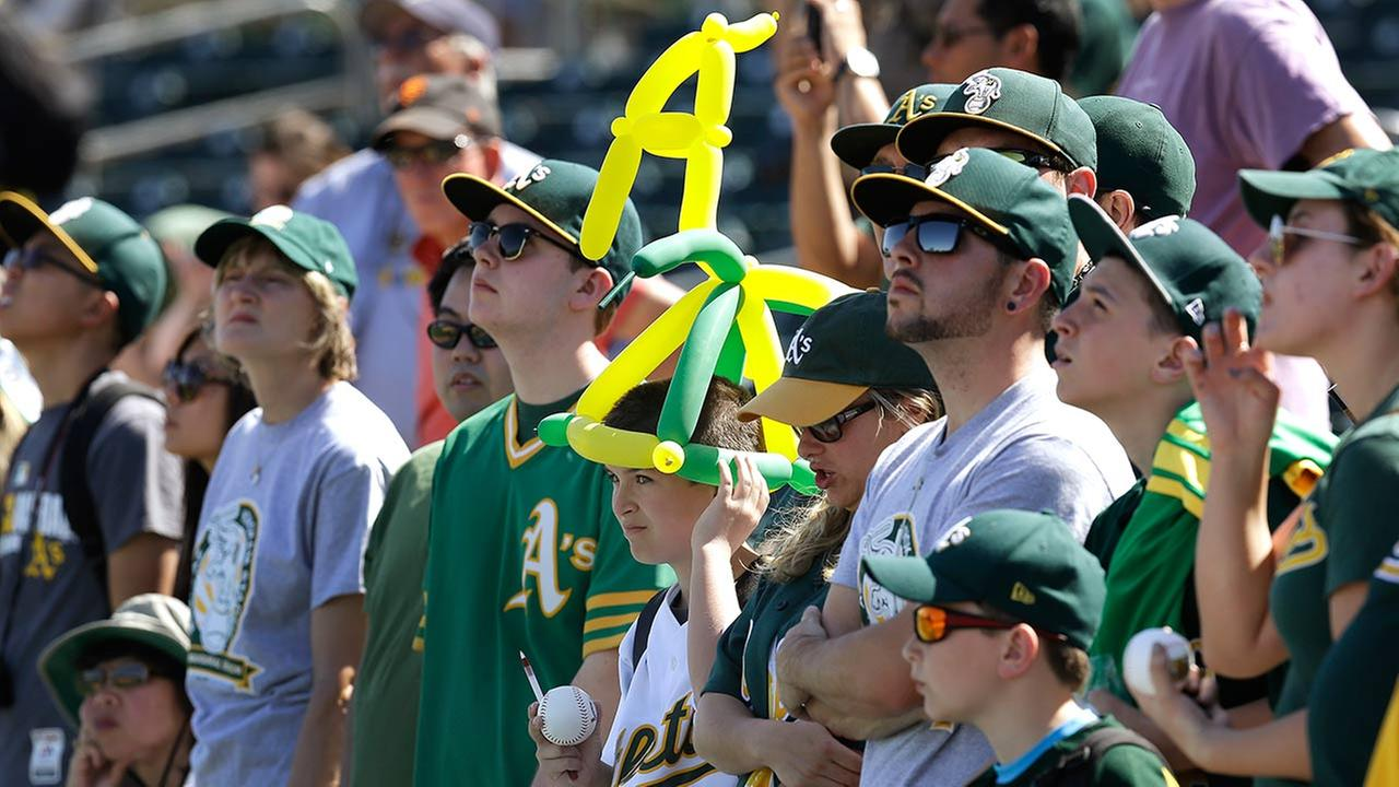 Oakland Athletics fans view batting practice prior to a spring training exhibition baseball game against the San Francisco Giants Saturday, March 14, 2015, in Mesa, Ariz.