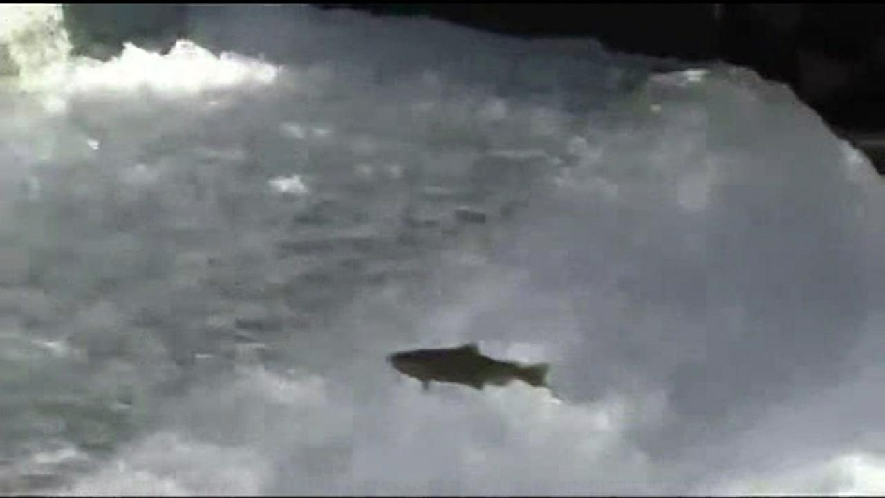 Low Salmon supply this fishing season due to drought, experts say