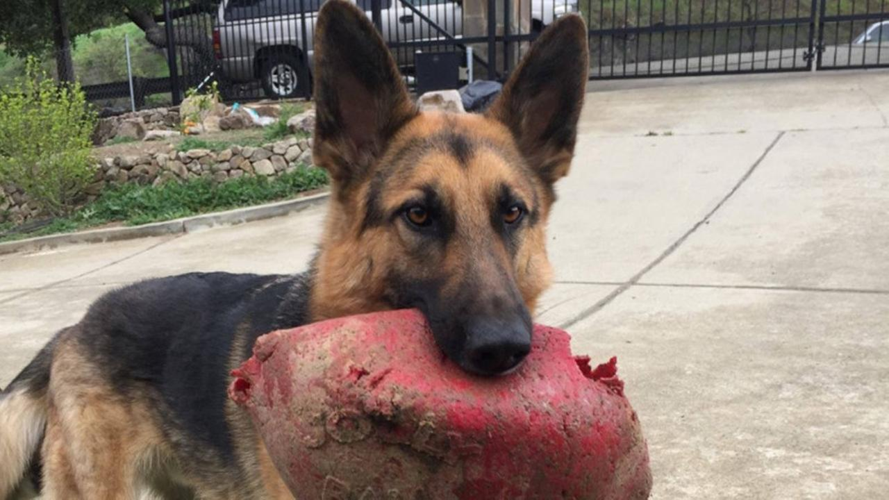 File -- Missing dog Murfee
