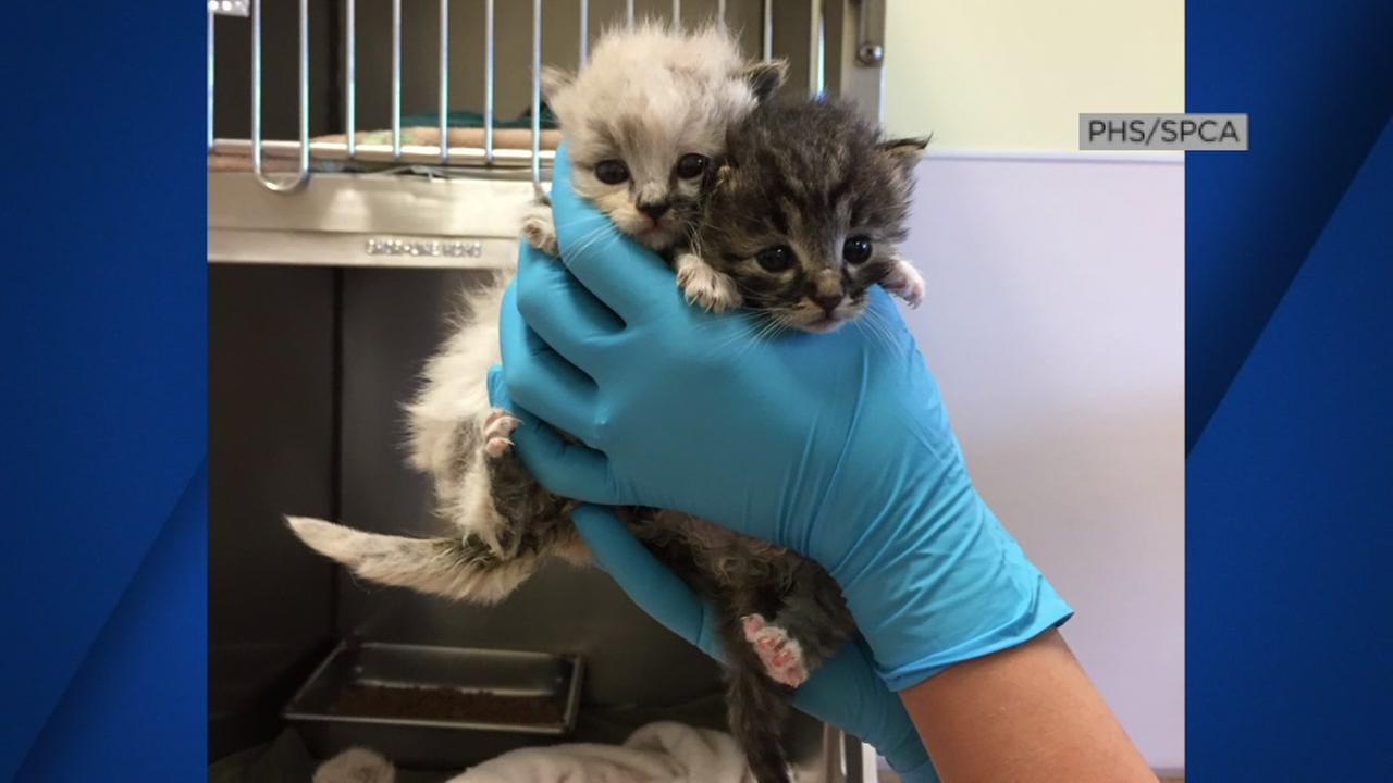 Two kittens appear at the Peninsula Humane Society after being rescued on Tuesday, May 2, 2017.